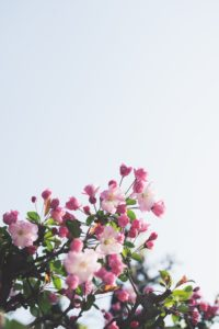 picture of spring flowers